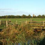 Old farmland
