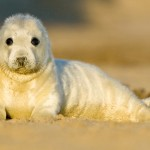 PageLines- HORSEY-SEALS-Peter-Mallett.jpg